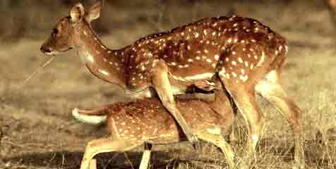 Top wildlife sanctuaries in Telangana