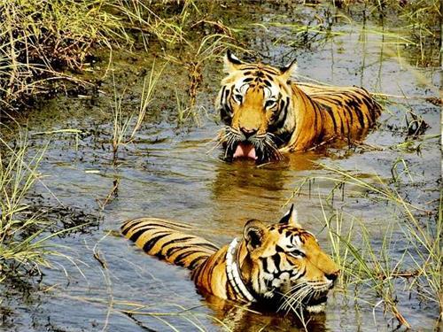Wildlife sanctuaries in Telangana