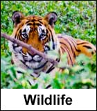 Wildlife Attractions in Telangana