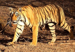 Wildlife Sanctuaries in Adilabad
