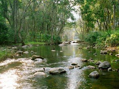 Top Wildlife Sanctuaries in Adilabad
