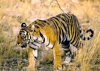 Wildlife attractions in Adilabad