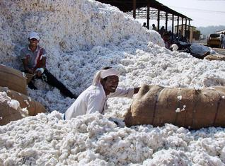 Cotton Cultivation