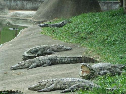 crocodile centre