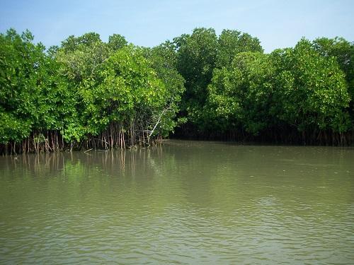 Forests in Tamil Nadu