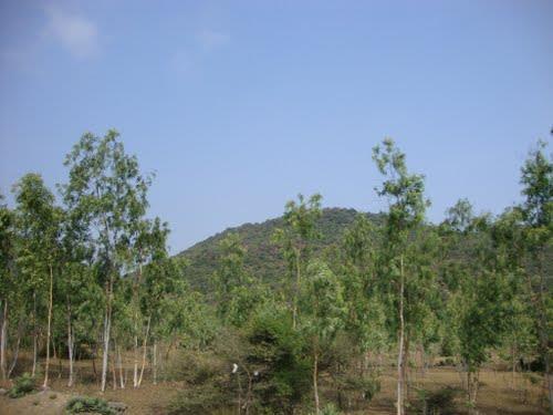 Acharapakkam_Tamilndu