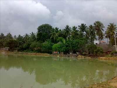 http://im.hunt.in/cg/tn/Adiramapattinam/City-Guide/m1m-adiramapattinam-panchayat-town.jpg