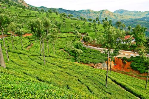Tea and Tourism Festival in Coonoor