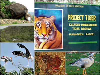 Tirunelveli Sanctuaries