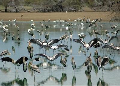 Birds at Koothankulam