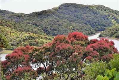http://im.hunt.in/cg/tn/Tirunelveli/City-Guide/m1m-Virgin-Landscape.jpg