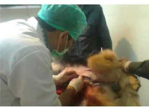 Veterinary Services provided in Uttar Pradesh