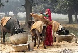 Winter Months in Uttar Pradesh