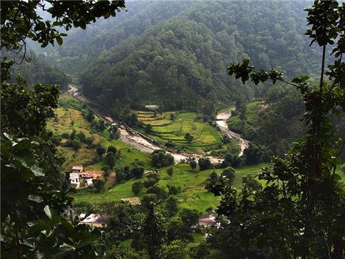A view of the forests of Chakrata