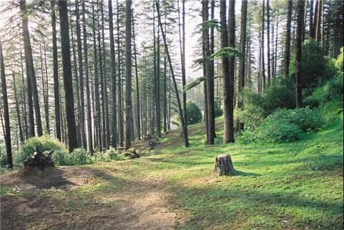 A view of the dense forests in Chamba