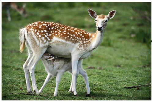 Askot Wildlife Sanctuary in Didihat