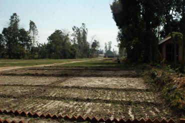 Fields in Dineshpur Town