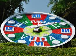 Floral Clock in Visakhapatnam