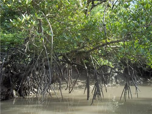 The Gorgeous Mangroves of Sunderban-Credit West Bengal Tourism