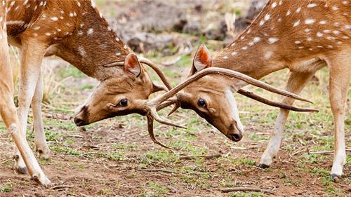 Deer Park from Bolpur