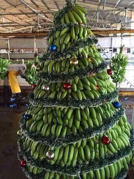 Image result for banana trees christmas in india
