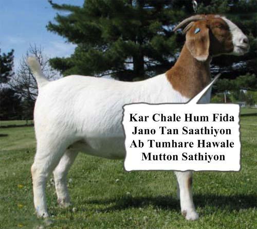 kar chale