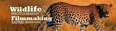 Wildlife Photography Filmmaking Safari