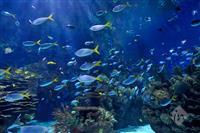 Sunny Aquariums