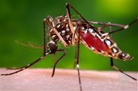 Petra Pest Management