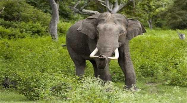 Elephant-100216