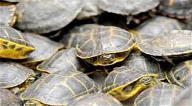 Turtles-04