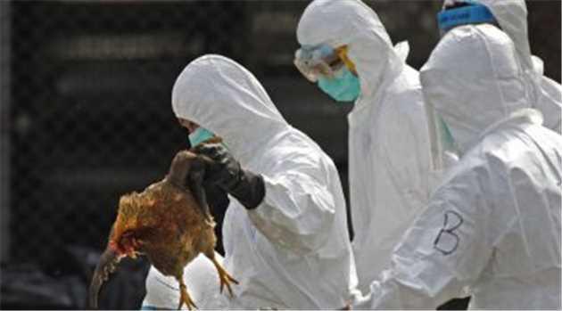 bird-flu-china