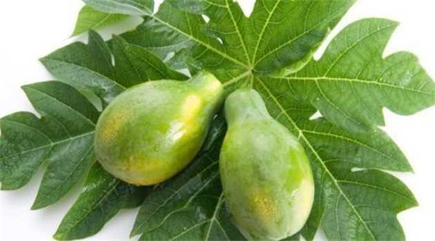 How papaya, fenugreek leaves can control dengue