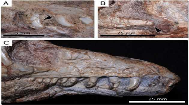 reptile-fossil-120316