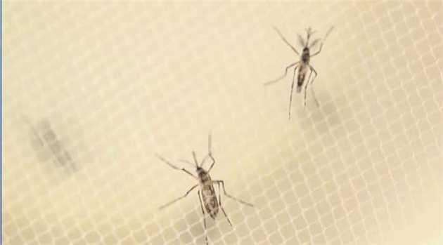 zika-virus-first-case-denmark