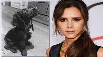 Victoria Beckham introduces 'new baby' Olive