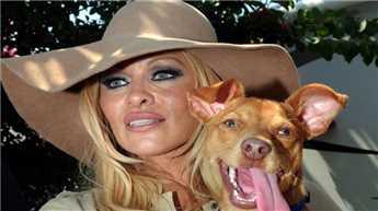 पामेला के पालतू कुत्ते ने की आत्महत्या