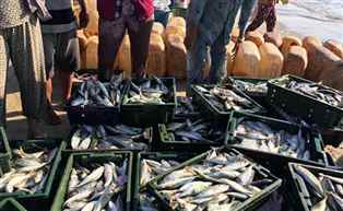 Bihar government lifts ban on sale of live fish in Patna
