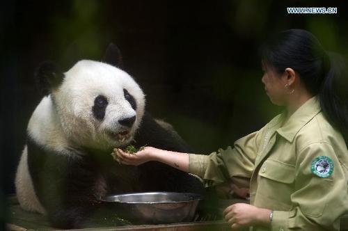 chinese-panda-35th-birthday-27-11