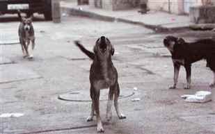 dog-4353