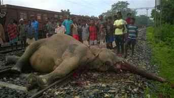 elephant-accident 26-9-16