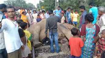 elephant-killed-743674