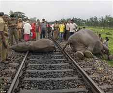 train kills elephant-7937