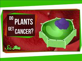 Do Plants Get Cancer?