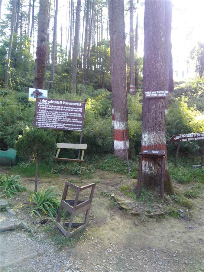 Entertainment in Dhanaulti
