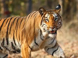 Jammu Surinsar Mansar Wildlife Sanctuary