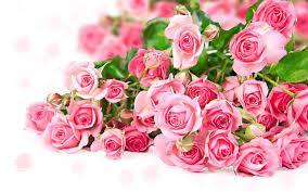 Muzaffarnagar Flower Shops