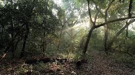 Wildlife Sanctuary Near Panvel