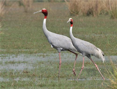 Sultanpur Bird Sanctuary near Rohak