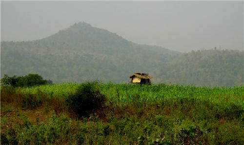 Agriculture Industry in warangal